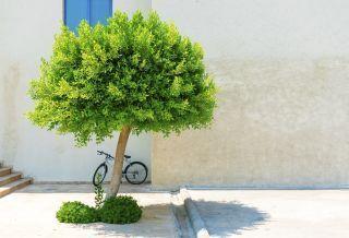 El logotipo ecológico garantiza…