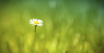 certificaciones-ecologicas-essencialis