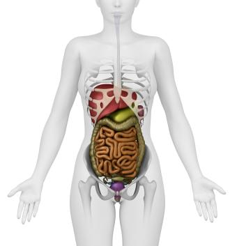 organos-essencialis
