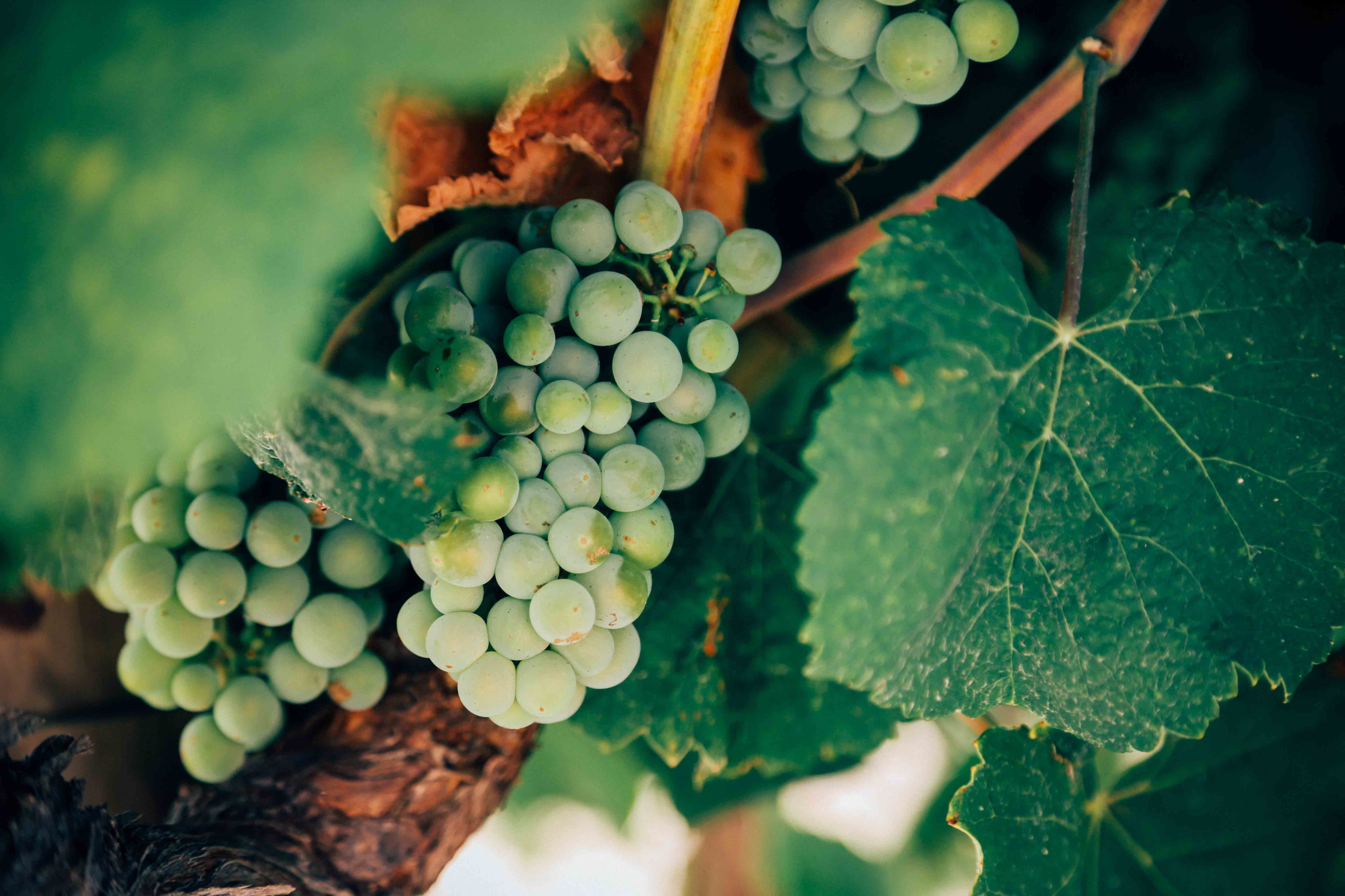 vino-eco-essenialis-foto-unsplash-by-Thomas-Verbruggen